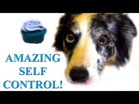 The Dog With The Most Self Control In The World YouTube - This dog has some serious self control that will make you laugh