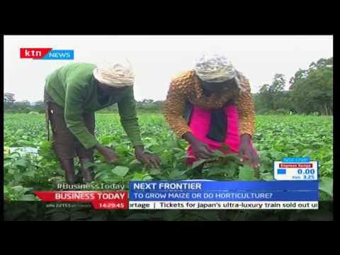 Next Frontier: French beans grown for export