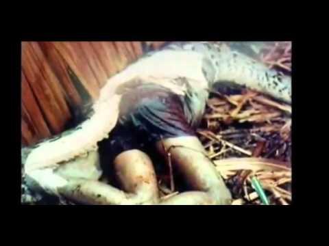 DOKU: Riesen Schlangen Dokumentation 2014