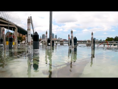 Ocean Documentary - Sydney Harbour