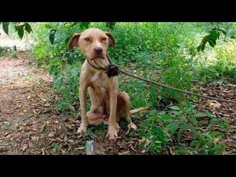 Материнское сердце и верёвка на шее  Собаку оставили умирать в лесу, но у неё было ради кого жить!