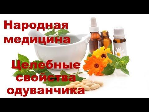 Лекарственный одуванчик лечебные свойства и