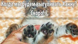 Котёнок рыси любит нежности ))
