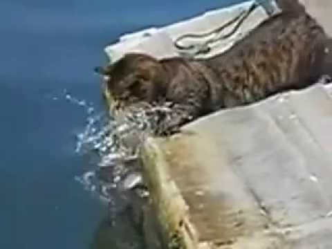 Cat attack and catch fish amazing video
