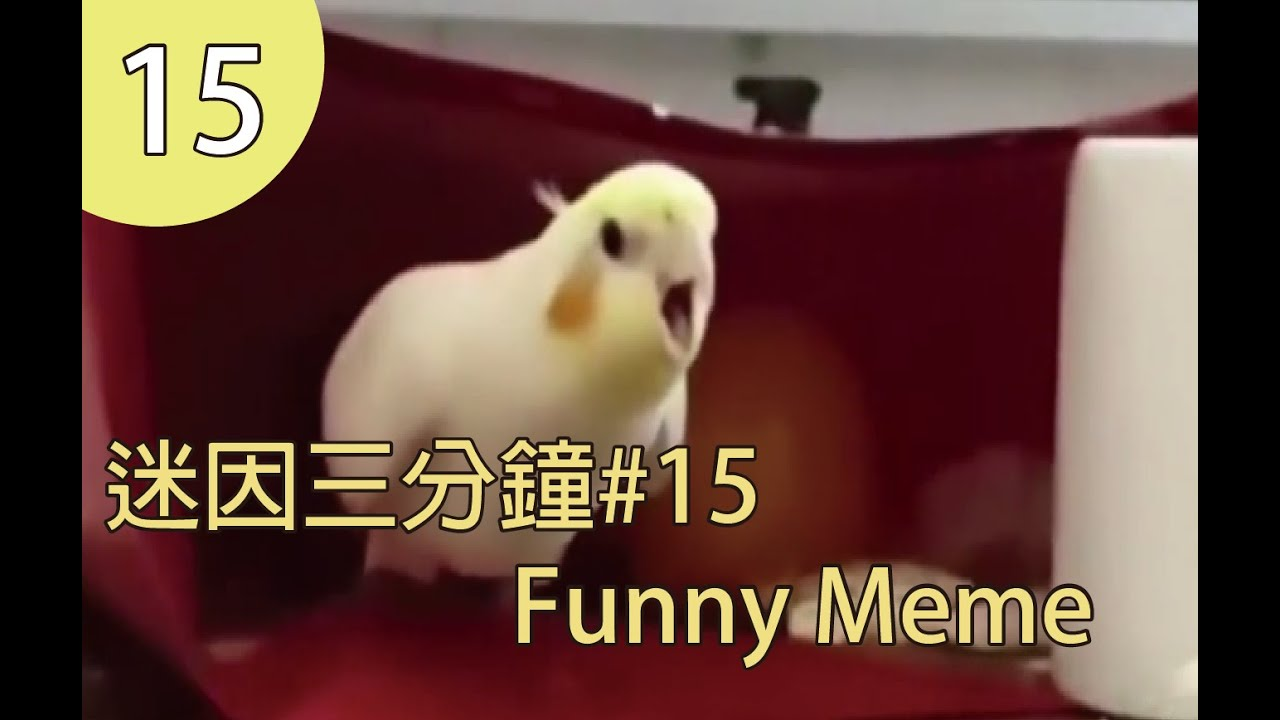 WTF迷因三分鐘|MeMe three minutes 15 #FunnyMeme #WTFMeme