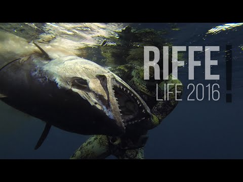 Spearfishing - Riffe Life 2016