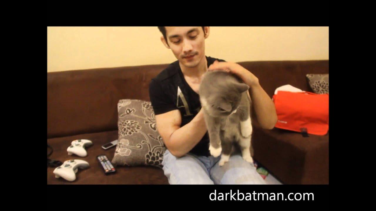 Anak Kucing Parsi 5 Bulan Funnycat Tv