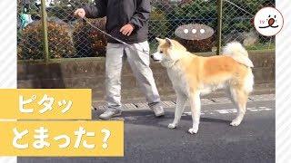 ワンコあるあるその1:散歩中の急停止。 愛犬が小型犬なら抱っこで運べ...