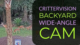 Preview of stream CritterVision Backyard Cam