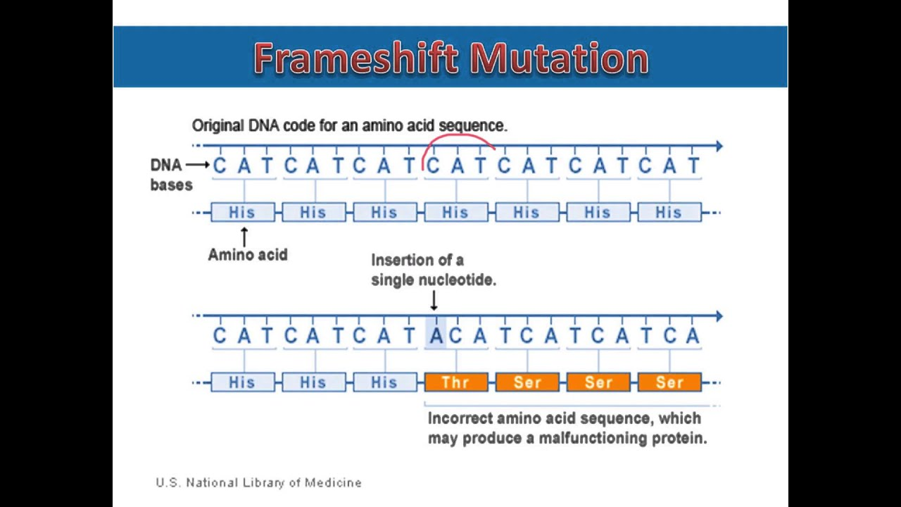 Frameshift Mutations - YouTube