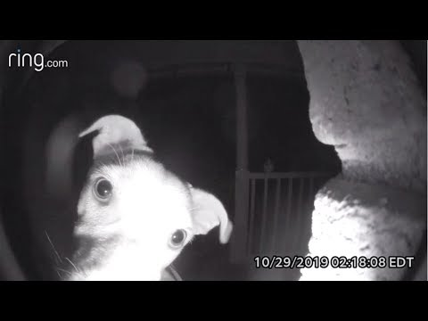 Dog Rings Doorbell After Getting Locked Out