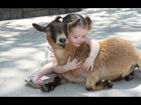 Babies Cuddling and Hugging Animals - Cutest Baby showing love to Animal Compilation