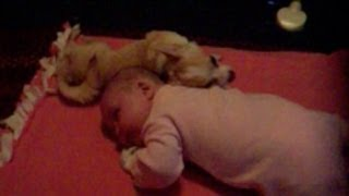 Dog Cuddling With Baby