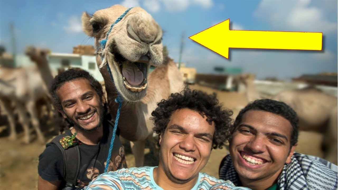 Best Animal Photobombs Ever YouTube - 35 hilarious animal photobombs ever