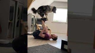 Australian Shepard Learning a New Acrobatic Trick || ViralHog