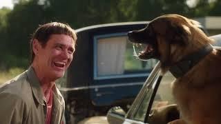 Лучший друг собак Тупой и ещё тупее 2