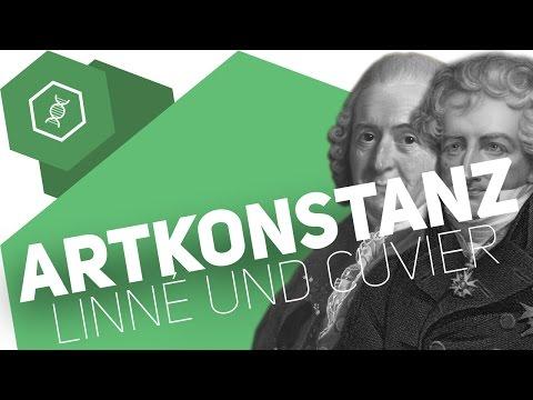 Theorie der Artkonstanz – Linné und Cuvier – Evolution
