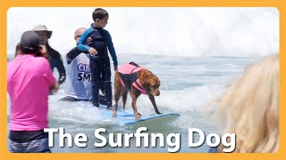 This Famous Surfing Dog Rides The Wave To Helping Others!