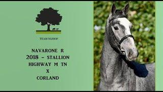 7. Navarone R (Highway M TN x Corland)