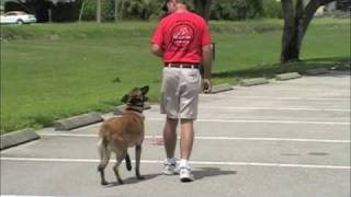 Sit Means Sit Of Palm Beach County- K9 Practice
