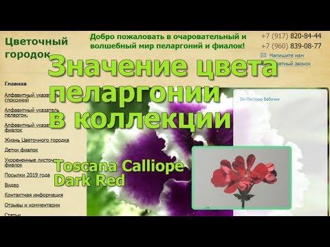 Значение цвета пеларгонии в коллекции. Toscana Calliope Dark Red