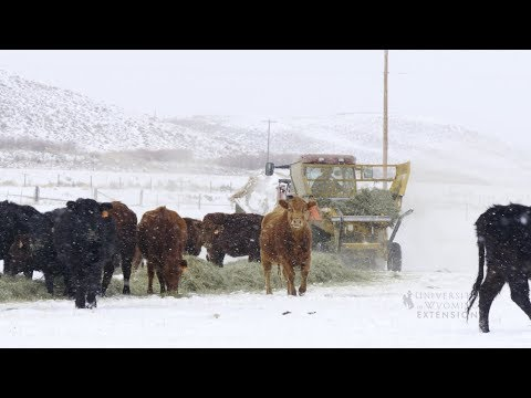 Winter Livestock Feeding