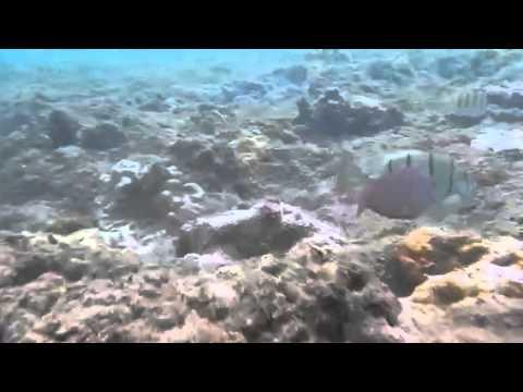 Snorkel drifting in Haena Park, Kauai, Hi