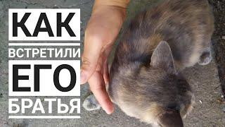 ЗАГРЫЗУТ😱 собаки или мне надо ее уносить, какова реакция котенка на встречу с братьями по СЧАСТЬЮ