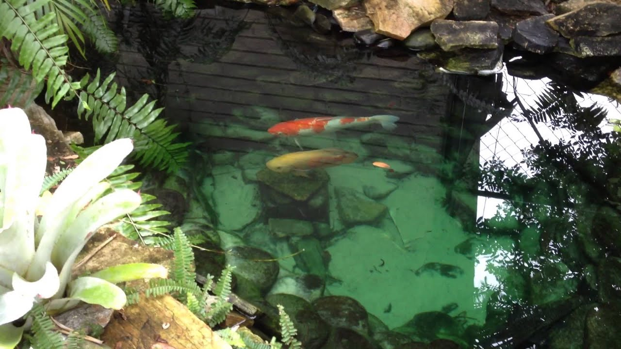 garden fish pond fuente con peces en el jardin youtube