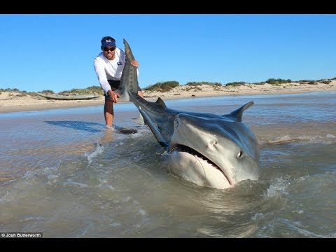 Shark fishing great white shark catch monster bull shark for Shark fishing games