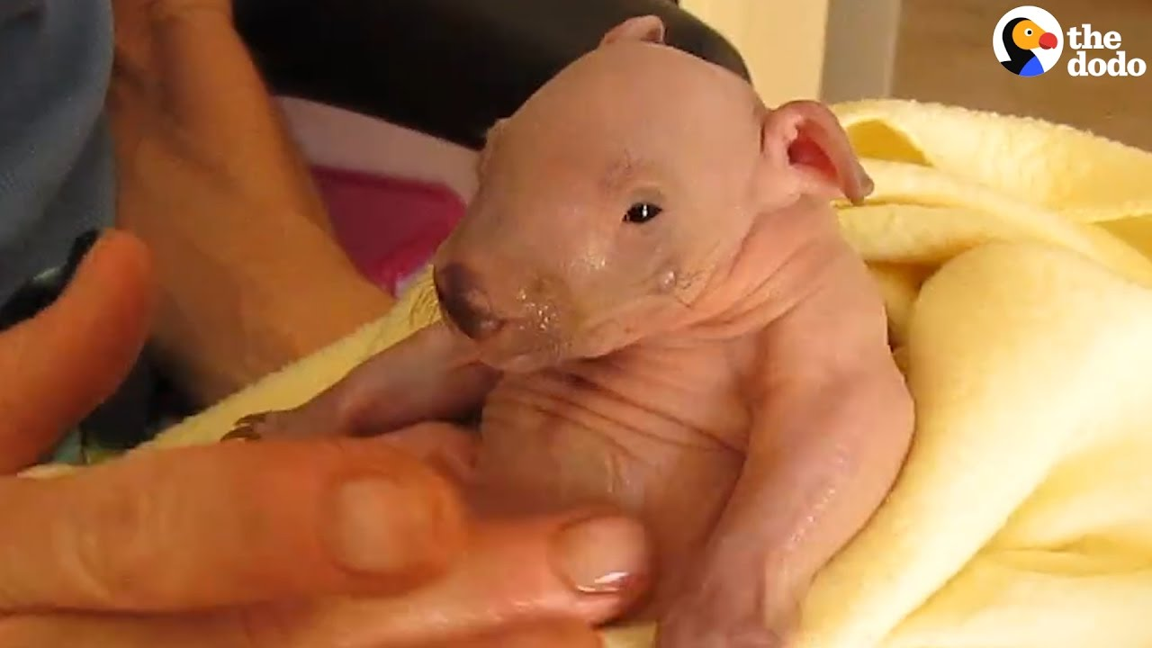 tiniest little wombat is all grown up now youtube