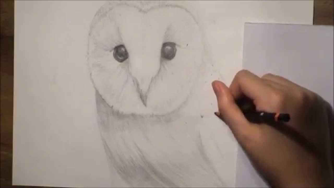 Realistic Barn Owl Drawing Youtube