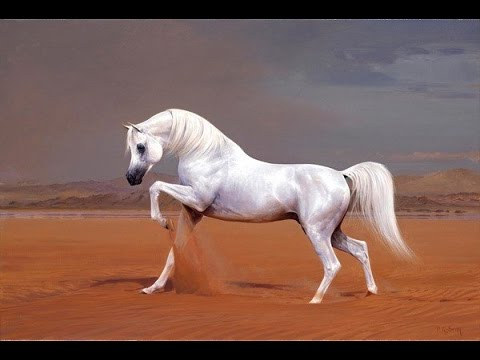 Amazing horse arabian horse youtube - Arabian horse pictures ...