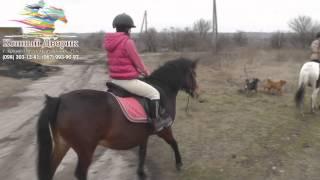 Прогулка на лошадях: Кривой Рог (видео презентация)(