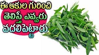 ప్రతి మగాళ్ళకు ఈ ఆకుల గురించి తెలిస్తే ఎవ్వరు వదలిపెట్టారు   telugu Health Tips