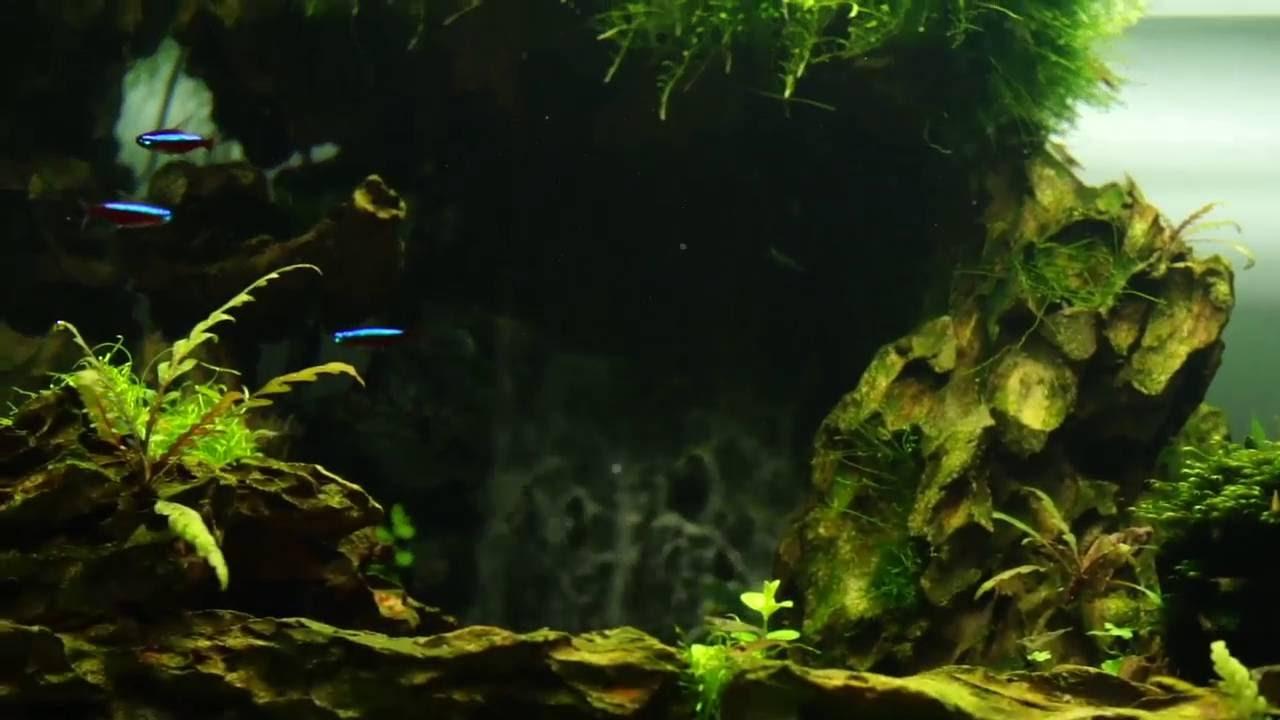 2尺水草造景缸~家裡第3座瀑布造景缸~未成景... - YouTube