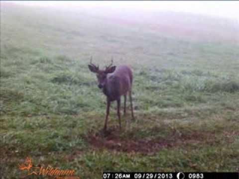 Pennsylvania Trail Camera Pictures 2013 Video 1