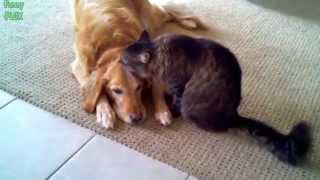 Best Funny Cats Grooming Dogs Compilation New 2014