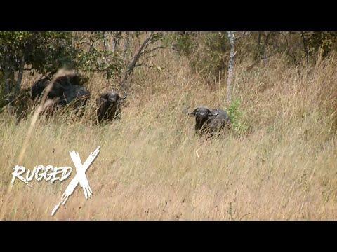 Cape Buffalo – Dangerous Game of Tanzania with J. Alain Smith