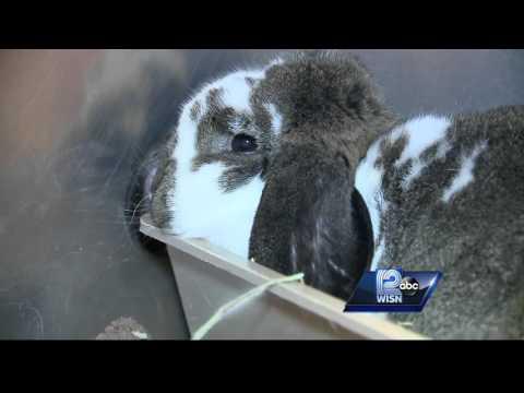 Humane Society helps rescue nearly 30 rabbits