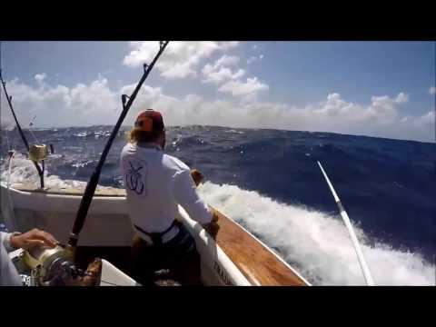"""Black Marlin Fishing On The Tradition""  | Billfish Movement TV EPISODE 08"
