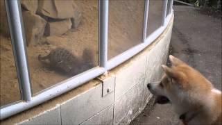 岡山県の池田動物園 ペット同伴で入園できる珍しい動物園です ナナはヒ...
