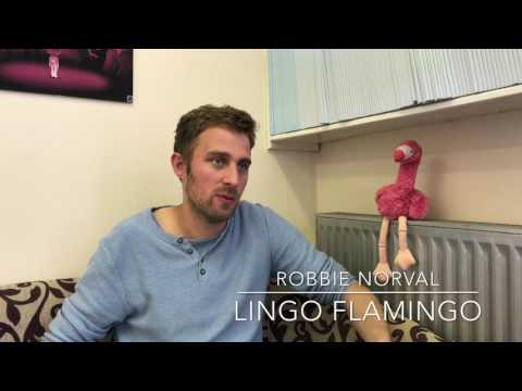 What does the future look like for Lingo Flamingo