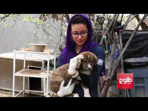 Nowzad, The Only Official Animal Shelter In Afghanistan