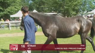 The Chaser Day Paray - 2016 - Lot 16 : Etrah