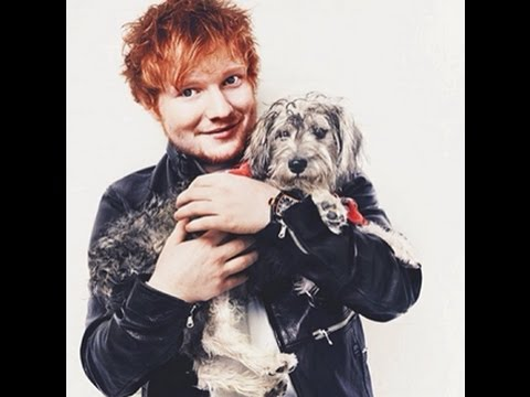"Dog DANCING on ""Shape Of You""....!!! Ft. Ed Sheeran"