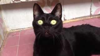 ウチの猫~野生化~(2013年7月15日)