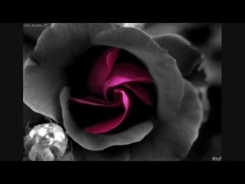 De Ti Enamorado  Banda Ms letra   YouTube