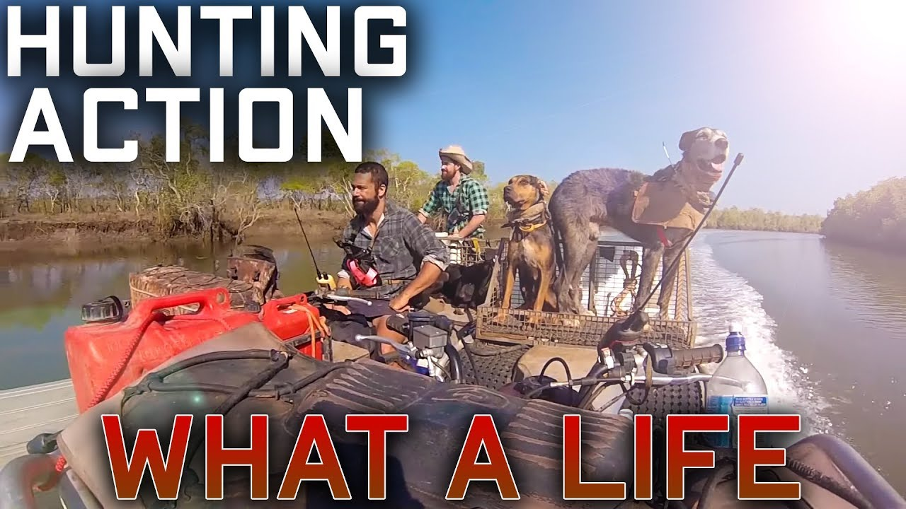 Hunting ACTION what a life- pig dog pig hunting wild boar trophy boar dogs mobs loan boar Aussie