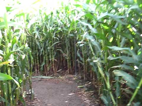 Corn Field Maze @ The Iron Kettle Farm